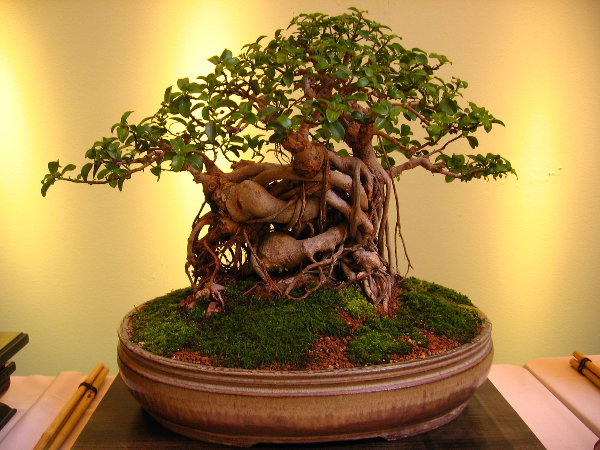 10 things avoid for bonsai tree