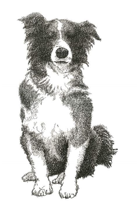 anti art pets  drawings  dogs  cats