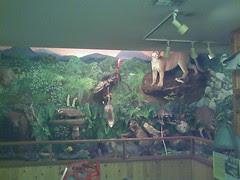 Museum diarama
