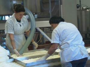 Making MT Tam at Cowgirl Creamery