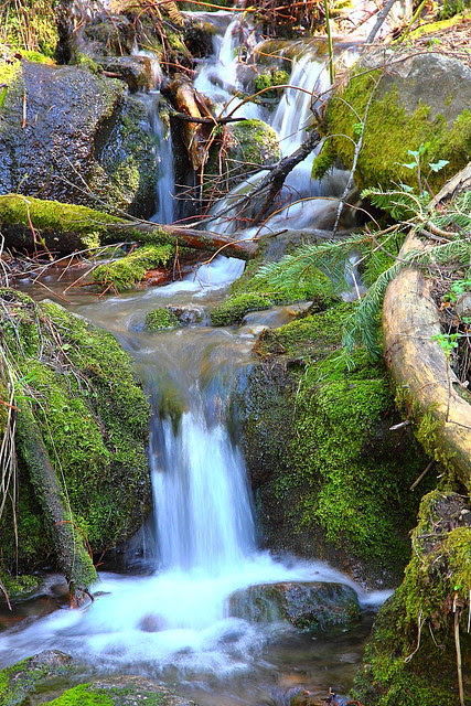 IMG_2994 Pohono Trail