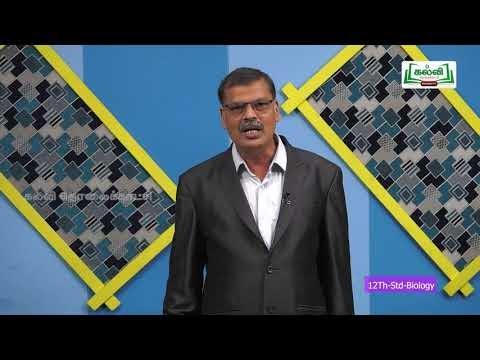 12th Bio Zoology உயிரினங்களின் இனப்பெருக்கம் அலகு 1 Kalvi TV