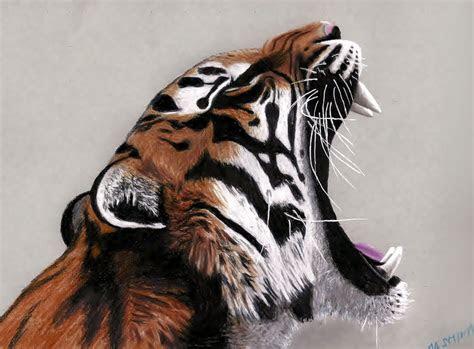 yawning tiger colored pencils drawing  jasminasusak