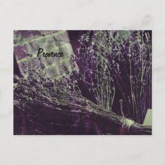 provence lavender postcard postcard