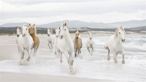 Horses High Definition Wallpapers.