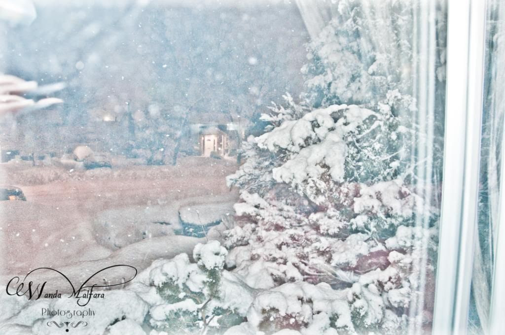 Fri March 2,2012, A snowy scene from our living room window. It was the heaviest snow ever.