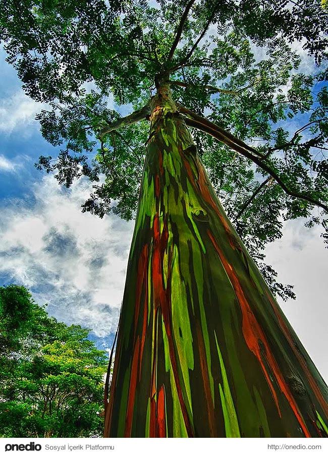 Daha Önce Görmediğiniz, Muhteşem Güzellikte 26 Ağaç Türü
