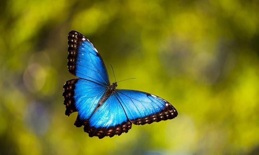 transformacao borboletas 12-