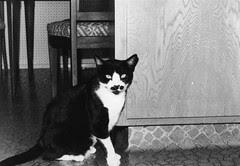 Bigotes (1972-1987)
