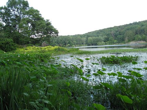Innisfree lake