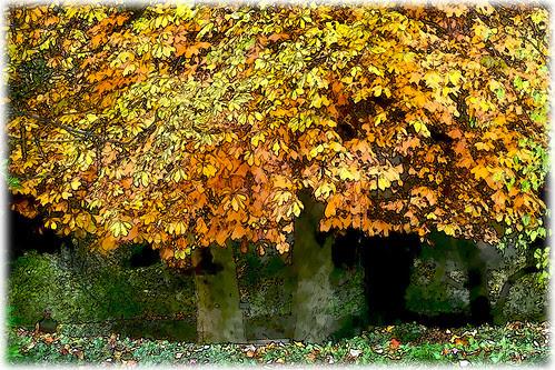 un otoño más