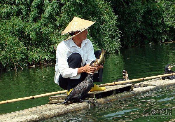 Pesca com pássaro