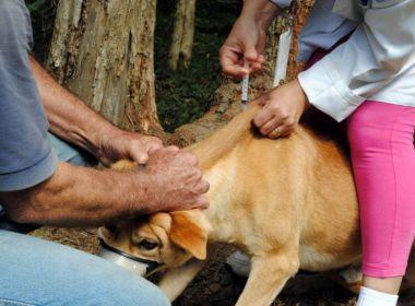Laboratório emite alerta para raiva animal em Lauro de Freitas, Feira e Catu