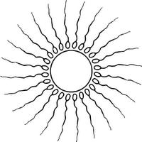 Ovum & Spermatozoons
