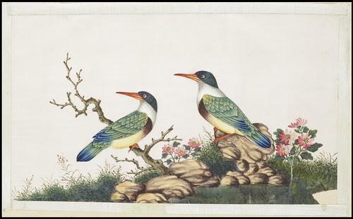 Bird Album g