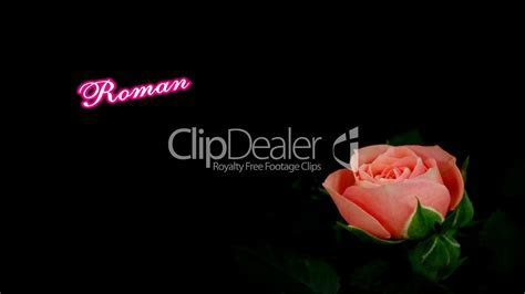 """Background """"Romantic Moments"""" Pink Rose: Royalty free"""