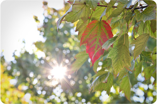 fall leaf and sun web.jpg