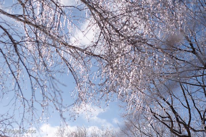 Winter_110203-4