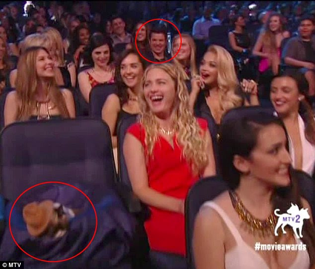 Now who's cross?: Grumpy Cat was given a better seat than Nick Lachey at Sunday's MTV Movie Awards
