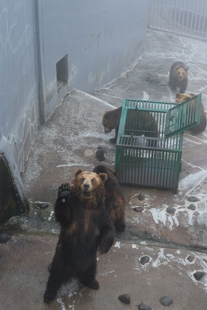 photo Noboribetsu Bear Park.jpg