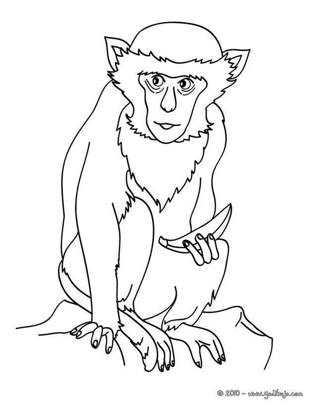 Dibujos Para Colorear Mono Capuchino Eshellokidscom