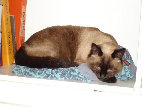 Bookshelf kitty