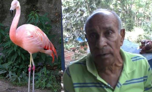 Desaprensivos roban tres flamencos del Zoológico Botánico Municipal de Moca