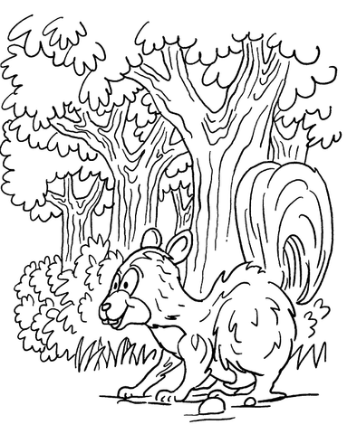 Dibujo De Mofeta En El Bosque Para Colorear Dibujos Para Colorear