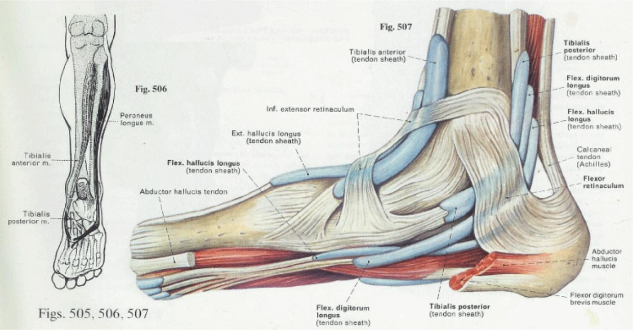 What is Plantar Fasciitis or Runner's Sole | Health Life Media