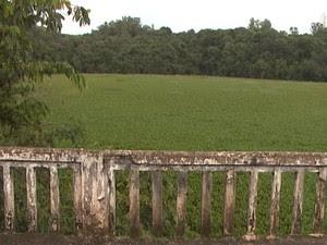 Aguapés proliferam em locais onde já foi feita retirada da planta (Foto: Reprodução/TV Integração)