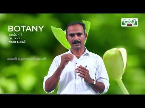 11th Botany தாவர உலகம் பாடம் 2 Kalvi TV