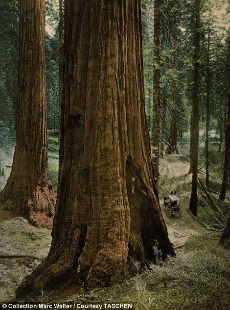 """""""Três Graças"""", Parque Nacional de Yosemite, Califórnia"""