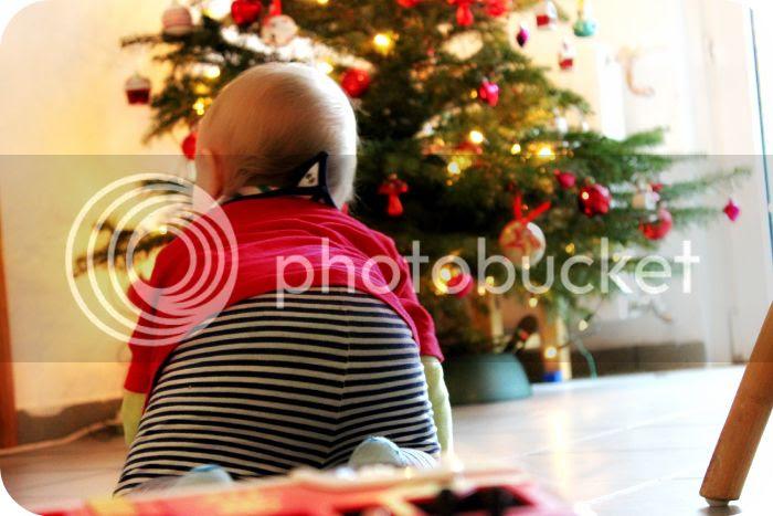 Auf zum Weihnachtsbaum