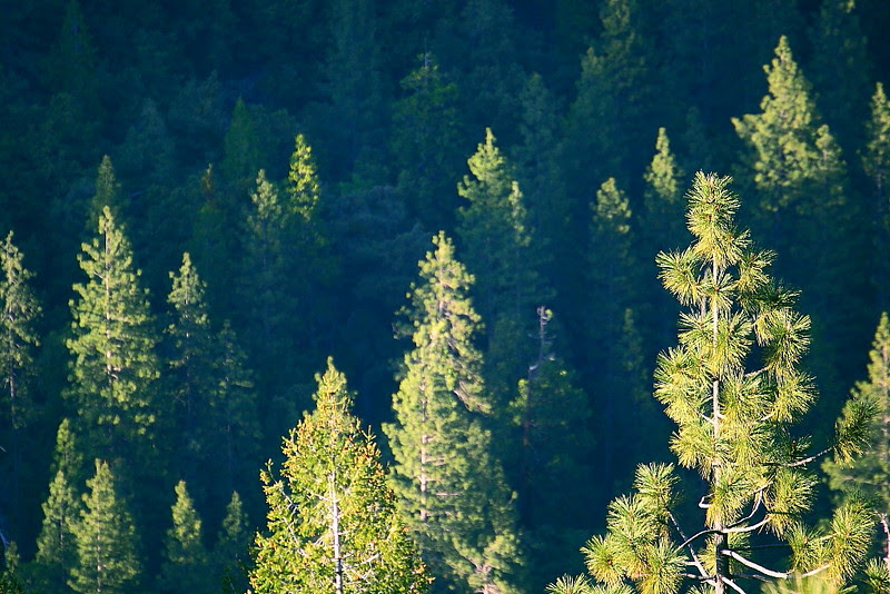 IMG_4376 Pohono Trail
