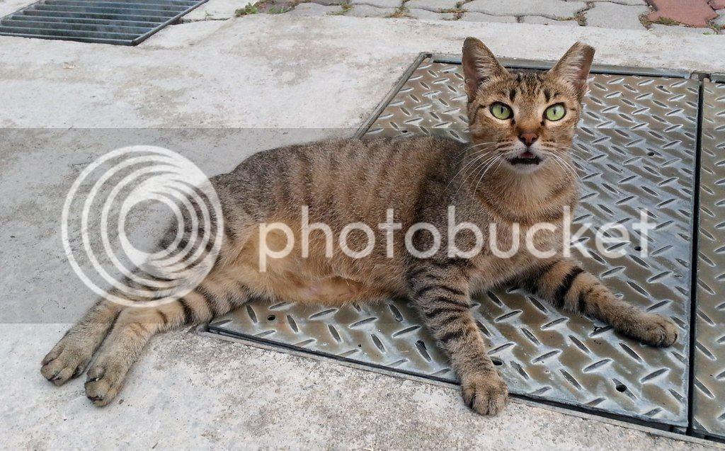 photo CatSimsP02.jpg