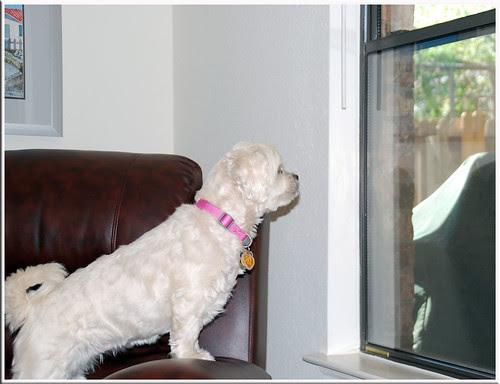 Window-Hunting_2