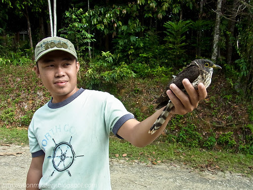 maliau basin staff with an injured hawk cuckoo R0012535 copy