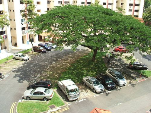 Car Park from Dining Room