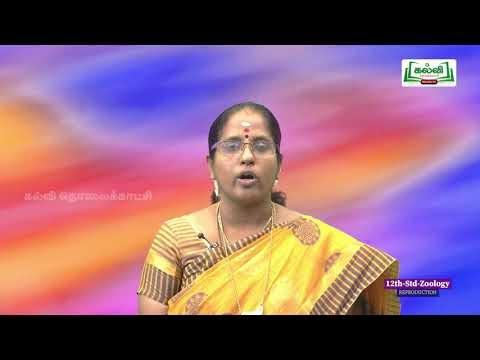 12th Bio Zoology மனித இனப்பெருக்கம் Kalvi TV
