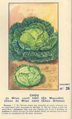 legume26 chou