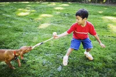 Tug-of-war with the family dog is fun for all ages.