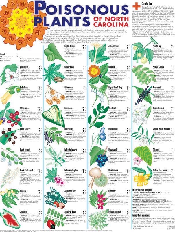 poisonousplants 800
