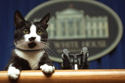 TREND ESSENCE:A Cat Is Said to Be Joining the Bidens in the White House