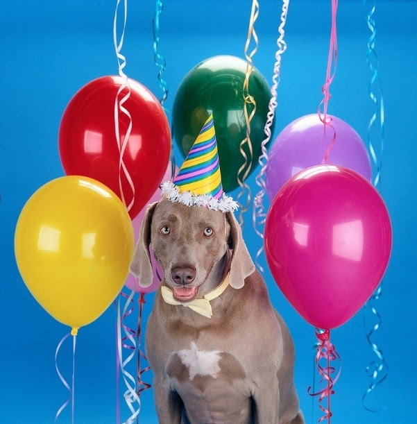 Celebrating Your Dogs First Year With Your Family 5 Birthday Tips