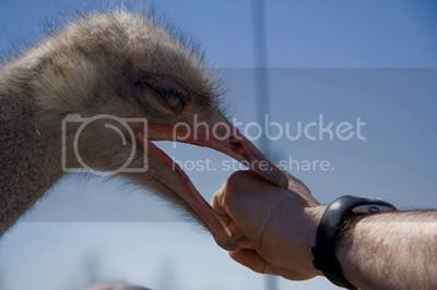 Ostrich festival Ouch