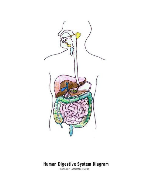 Digestive System Blank Diagram for Kids | Diagram | Pinterest ...