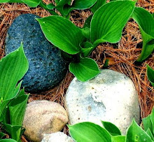 Hosta and stones, Early Spring 2008