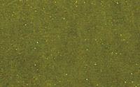 Moss: YP036-5
