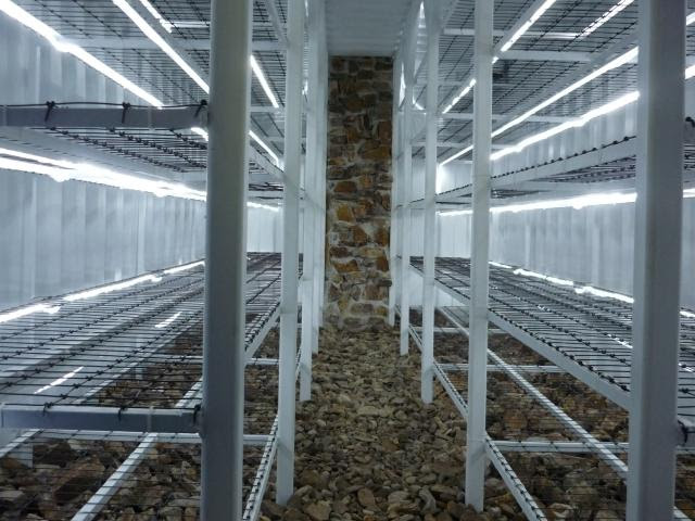 Image result for mushroom grow house