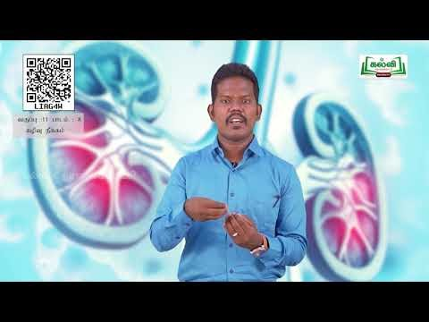 11th Zoology கழிவுநீக்கம் அலகு 8 பகுதி 1 Kalvi TV
